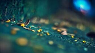 Wallpapers Photography Depth of Field Pictures
