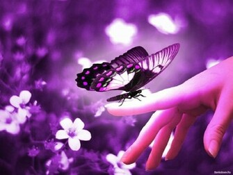 Cute Butterfly in Purple   Computer Screen Saver PC Desktop Wallpaper