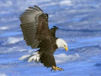 Freeware Birds of Prey Screensaver at Download CollectionCom