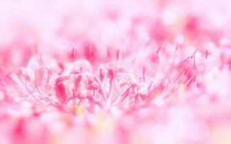 HD Bright Pink Wallpaper