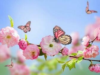 Download wallpaper 1600x1200 flowers butterflies spring bloom