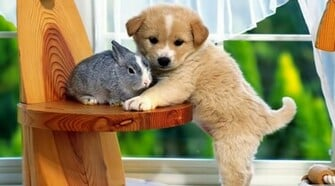Best Friends Puppy And Rabbit HD Wallpaper Animals HD Wallpaper