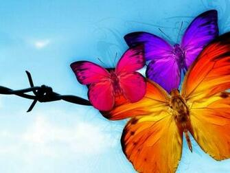Butterfly HD Wallpapers Your Title