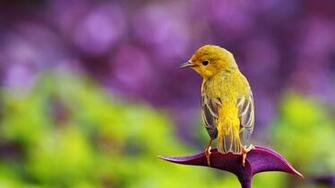 Beautiful HD wallpapers Birds Wallpaper HD 1080P All