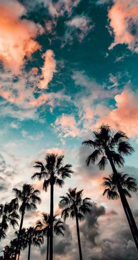 Long Beach California   The iPhone Wallpapers