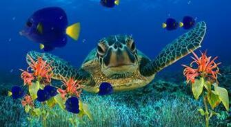 Animated Aquarium Wallpaper   Animated Desktop Wallpaper