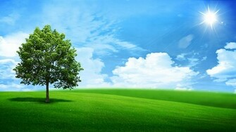 natural nature oak outdoor panorama pasture season sky spring