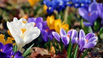 Best top desktop spring wallpapers hd spring wallpaper backg