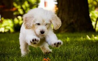 Little Dog Playing In The Wood HD Wallpaper Desktop Backgrounds