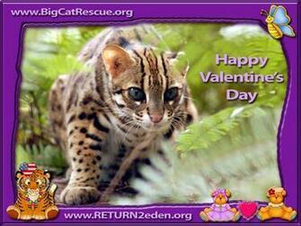 cat valentine wallpaper 181 Cat Valentine Wallpaper