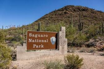Saguaro National Park The Greatest American Road Trip