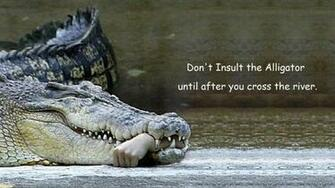 Dont Insult The Alligator wallpaper   ForWallpapercom