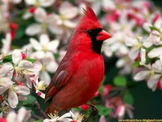 wallpaper bird wallpapers wallpaper birds bird wallpaper desktop