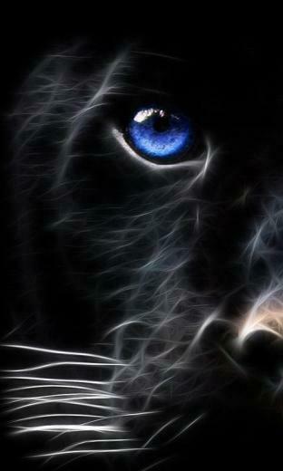 black tiger mobile phone wallpaper