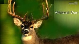 background deer wallpaper for desktop deer wallpaper deer wallpapers