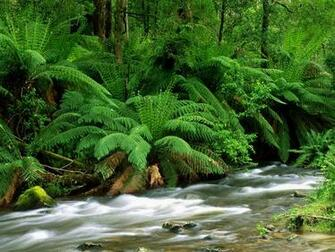Yarra Ranges National Park Australia Wallpapers HD Wallpapers