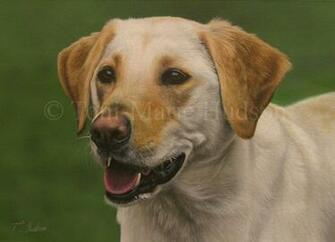 Molly   Yellow Lab portrait by Canis Lupess