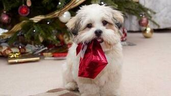 Cute Animal Christmas Wallpaper 9013 Hd Wallpapers in Celebrations