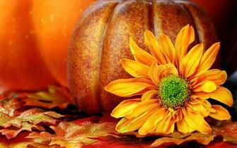 Fall Wallpapers With Pumpkins CX4J5UPjpg   Picseriocom