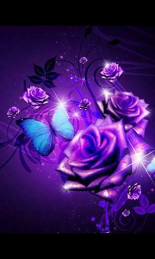 Download Purple Roses Live Wallpaper 1 for Android   Appszoom