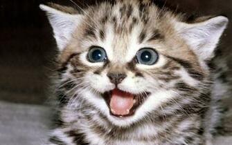Cute Kitten Wallpaper   Kittens Wallpaper 16094681