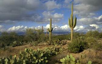 Saguaro Park wallpapers Saguaro Park stock photos
