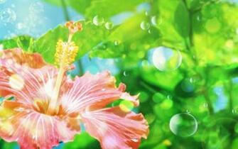 Flower wallpapers   Windows 7 Vista XP Picks Wallpaper 27862399