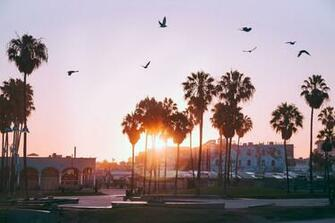 100 Beautiful Venice Beach Pictures Download Images on