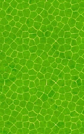 Crocodile skin pattern Mobile Wallpaper 4647