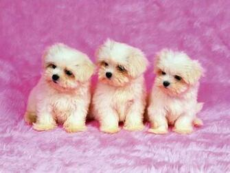 Cute Dogs   Dogs Picture