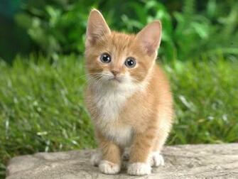All Wallpapers Beautiful Cats Hd Wallpapers