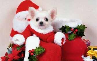 Cute Christmas   Backgrounds Wallpapers Pictures Pics Photos