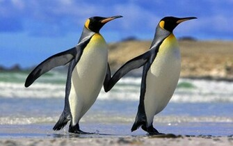 Wallpapers 4 u Download Cute Beautiful Penguin HD Wallpaper