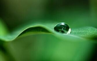 Green Dew Drop Wallpapers HD Wallpapers