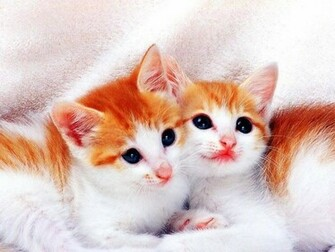 Wallpapers He Wallpapers cute cats wallpapers