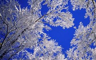 Beautiful Winter Images   Viewing Gallery