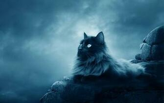 7784 Cat HD Wallpapers Background Images