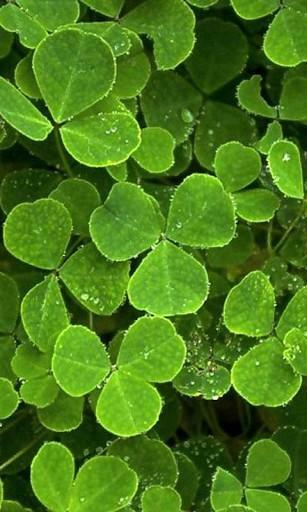 View bigger   Four Leaf Clover Wallpapers for Android screenshot