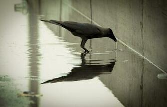 Crow High Quality Wallpapers Design You Trust Design Culture