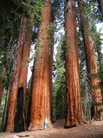 Download Redwood National and States Park is a huge protected area