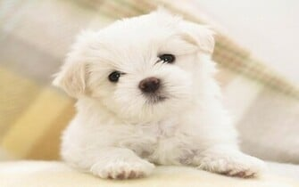 Cute Dog HD Wallpapers for all resolution HD 2880x1800 Cute