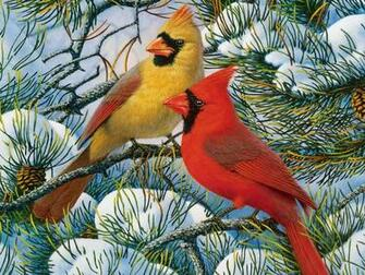 Winter cardinals wallpaper   ForWallpapercom