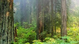 Foggy morning in Redwood National Park [1920x1080] wallpaper