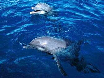 Dolphin Wallpapers Images and animals Dolphin pictures 662