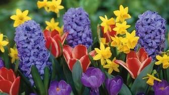 Spring flowers wallpaper 3254