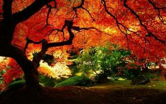 Beautiful Autumn Red Leaves Wallpaper