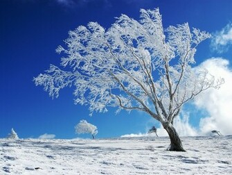 Winter Desktop Backgrounds Winter Desktop Wallpapers For