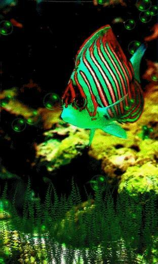 Fish live wallpaper Android Live Wallpaper download   Download