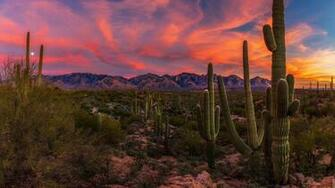 55 Saguaro National Monument Sunset Wallpapers   Download at