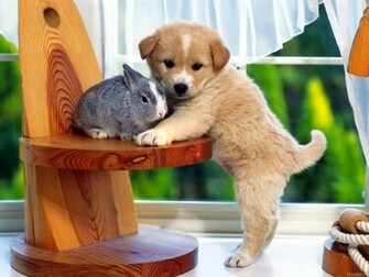 Funny Dog Wallpaper very Funny Puppies